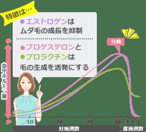妊娠中のホルモンバランス