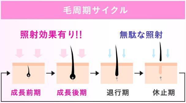 キレイモ脱毛効果の毛周期について