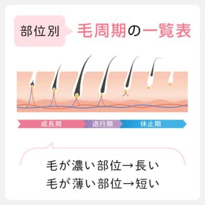 部位別毛周期の一覧表